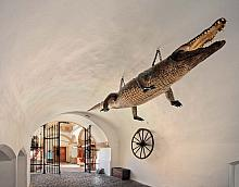 In the passage of the Old Town Hall (no. 8) there is a stuff ed Nile crocodile (Crocodylus niloticus) suspended from the ceiling and bearing a ...